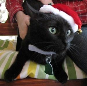 Sue_Christmas2011
